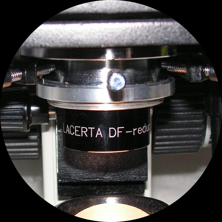 Lacerta Cardioid -Lacerta