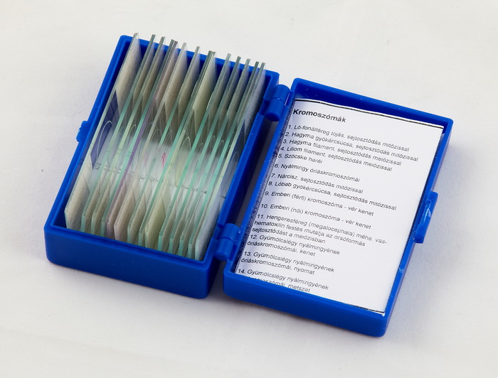 Lacerta Prep14chromo -Lacerta
